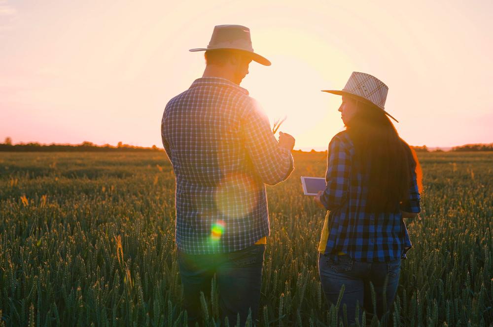 Confira tudo sobre crédito e gestão de riscos na propriedade rural.